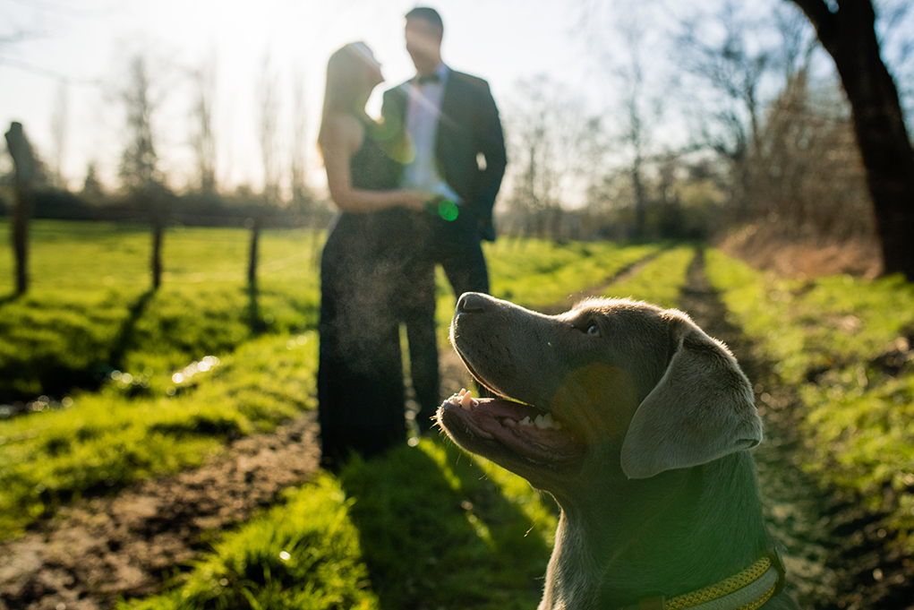 Spring outdoor engagement photos with dogs by DC wedding photographers Potok's World Photography