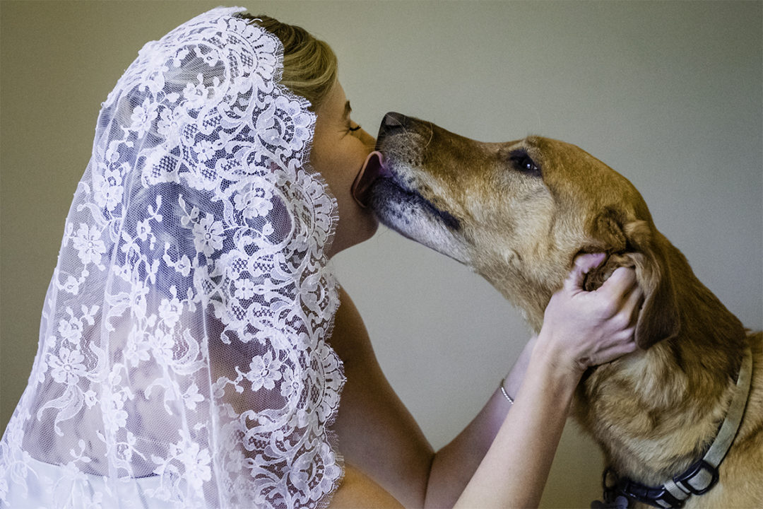 Bride with her dog in her wedding dress in Falls Church, Virginia by DC wedding photographers of Potok's World Photography