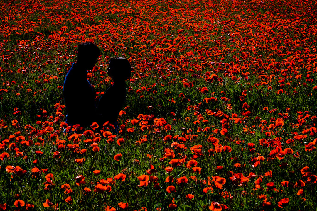 Spring engagement photos and silhouette of couple in red poppy fields by DC wedding photographer Potok's World Photography