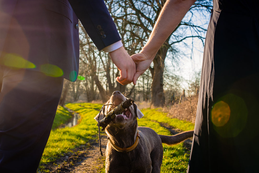 Engagement sessions with dogs by DC wedding photographers of Potok's World Photography