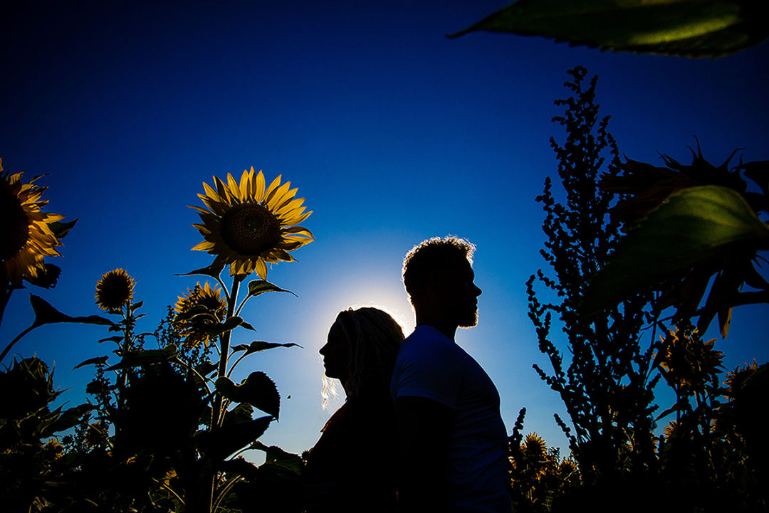 Photos of couple posing in sunflower field during engagement session