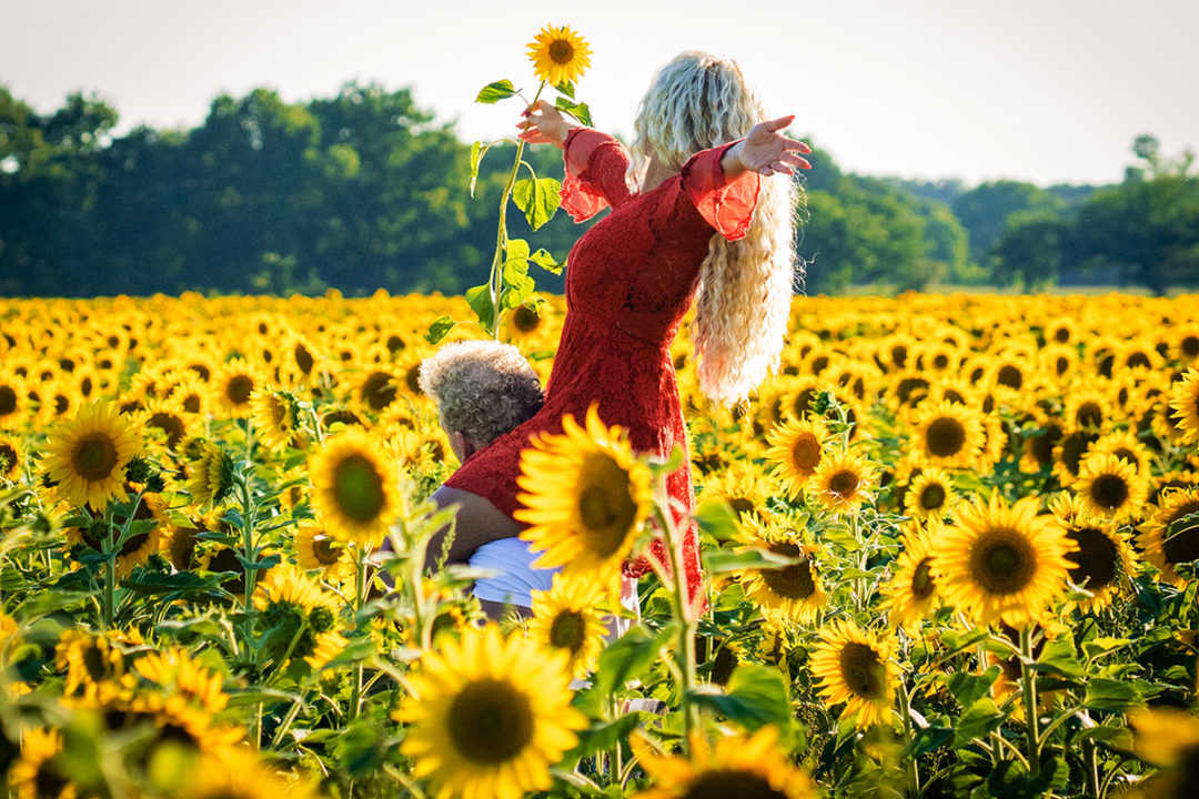 Sunflower field engagement session by DC wedding and elopement photographers of Potok's World Photography