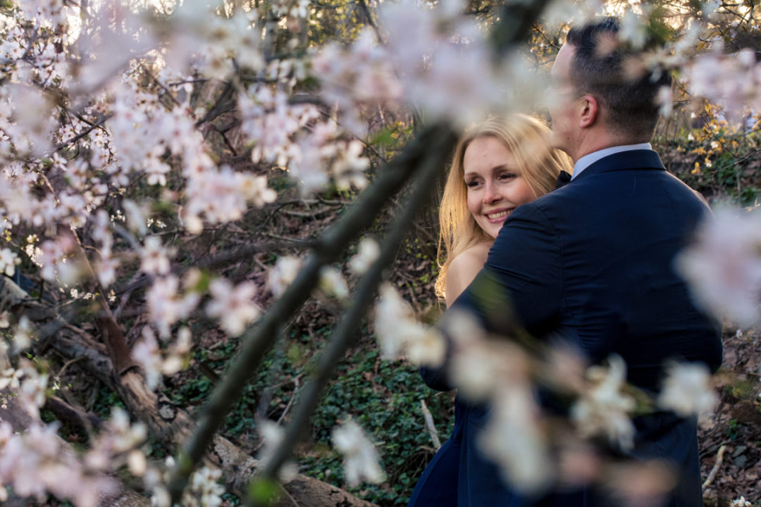 Sunset cherry blossom engagement session at Meadowlark Botanical Gardens in Vienna Virginia by DC wedding photographers of Potok's World Photography