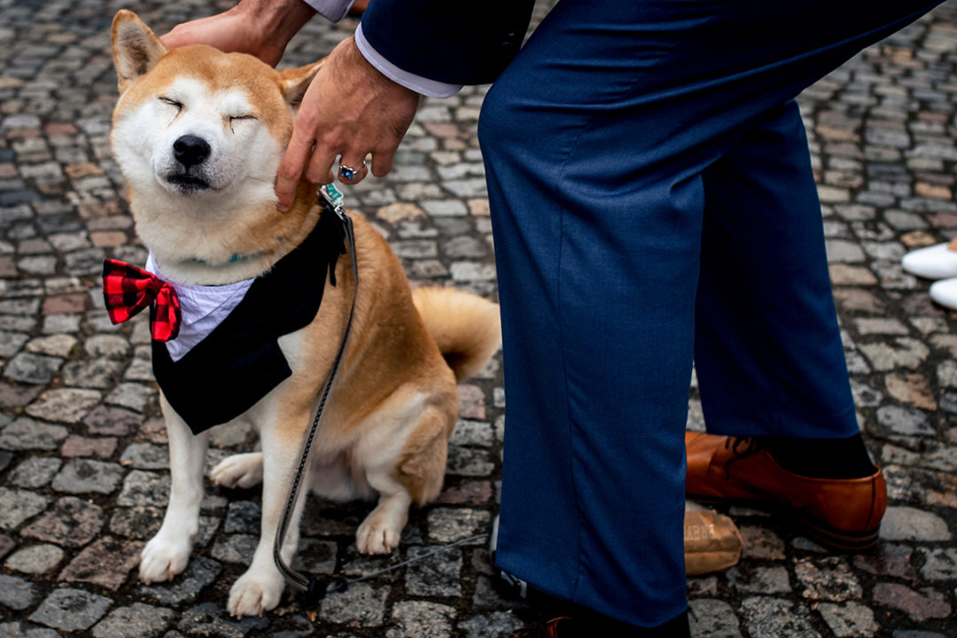 Dog in tux during courthouse wedding in Gehrden Germany by DC wedding photographers of Potok's World Photography